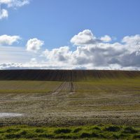 Field and Sky Bempton Cliffs RSPB | northolmefiley.com
